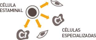 celulas_estaminais_01