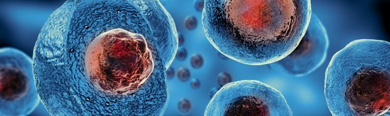 Células Estaminais